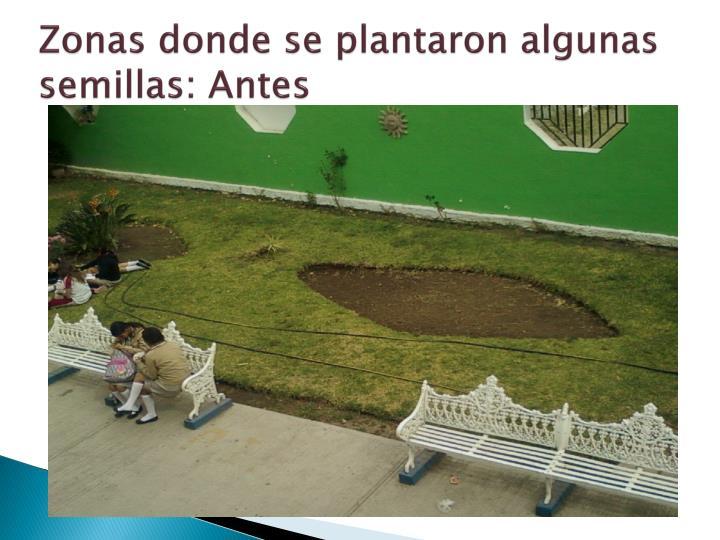 Zonas donde se plantaron algunas semillas: Antes
