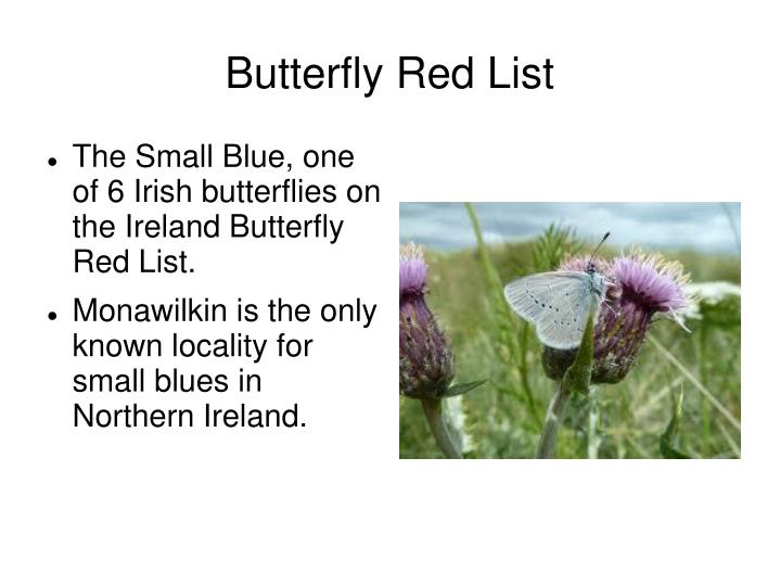 Butterfly Red List