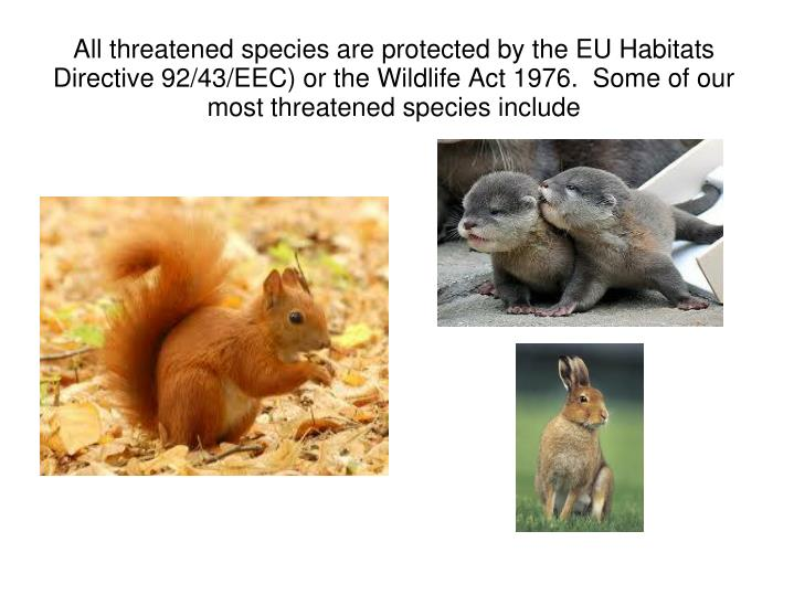 All threatened species are protected by the EU Habitats Directive 92/43/EEC) or the Wildlife Act 1976.  Some of our most threatened species include