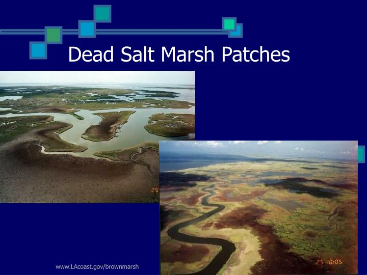 Dead Salt Marsh Patches