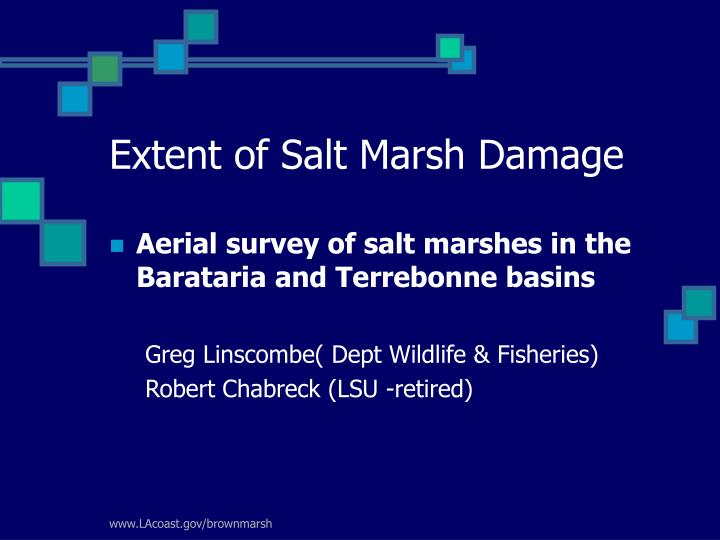 Extent of Salt Marsh Damage