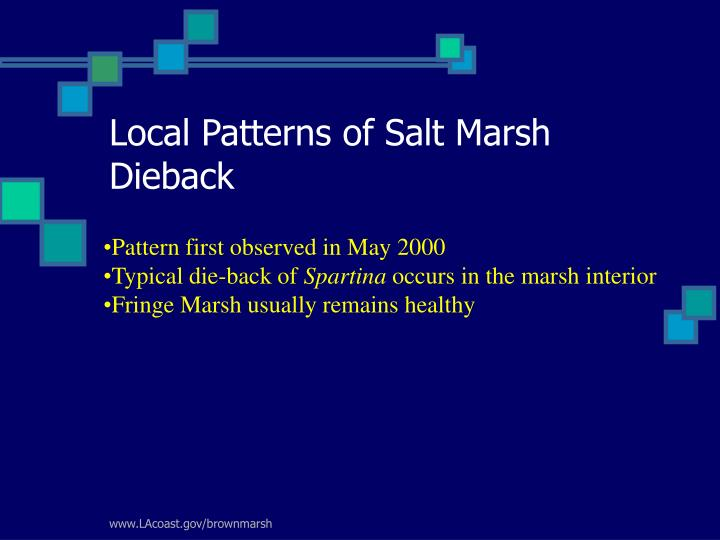 Local Patterns of Salt Marsh Dieback