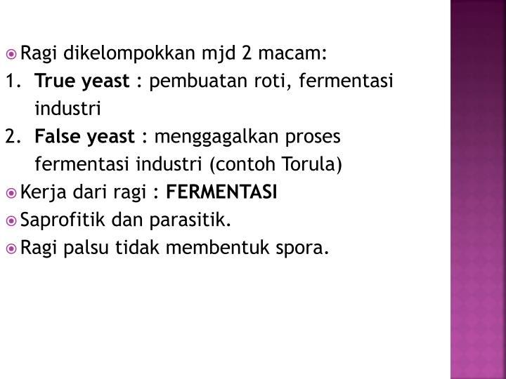 Ragi dikelompokkan mjd 2 macam: