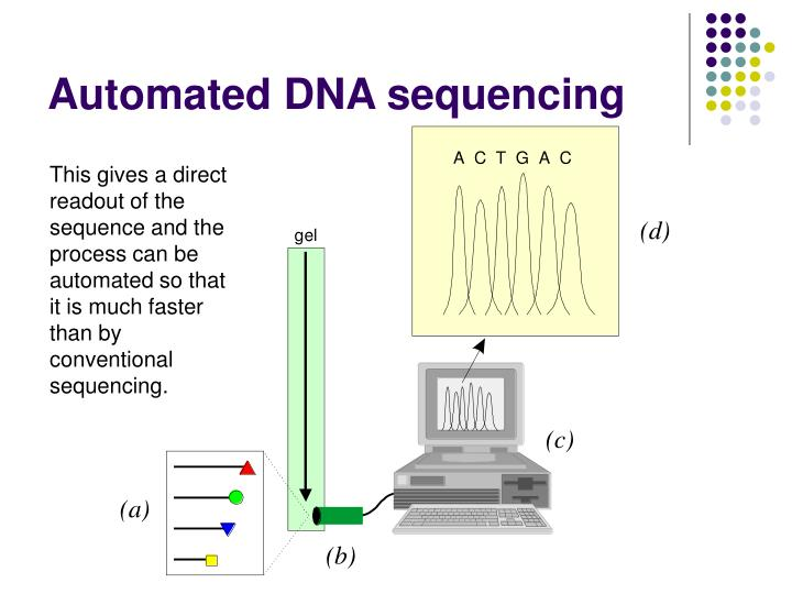 This gives a direct readout of the sequence and the process can be automated so that it is much faster than by conventional sequencing.