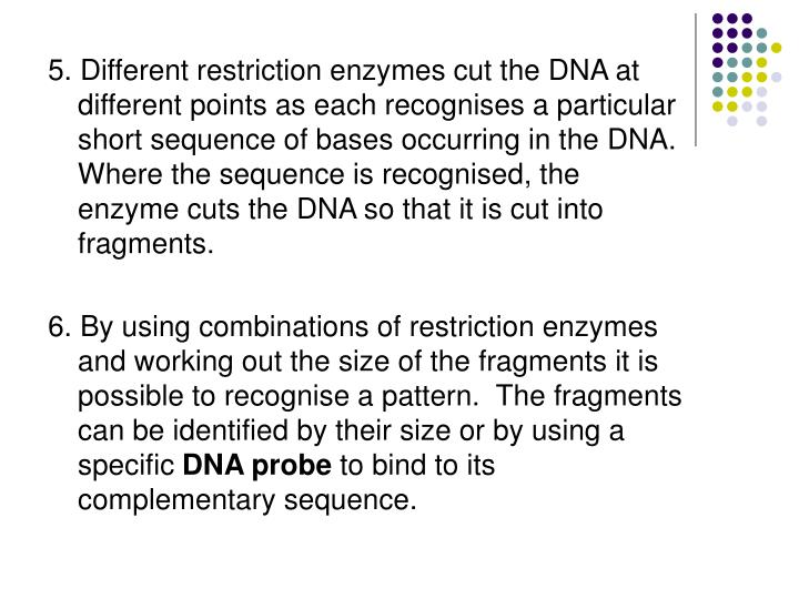 5. Different restriction enzymes cut the DNA at different points as each recognises a particular short sequence of bases occurring in the DNA.  Where the sequence is recognised, the enzyme cuts the DNA so that it is cut into fragments.