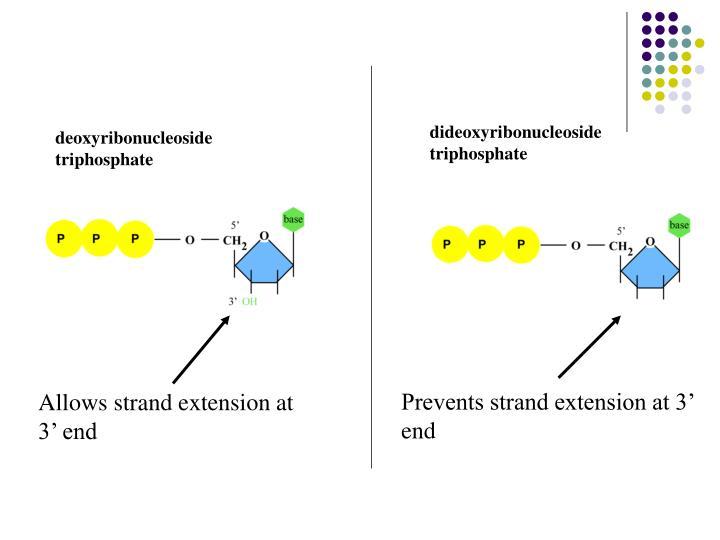 dideoxyribonucleoside  triphosphate