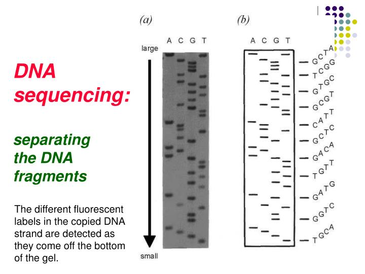 DNA sequencing: