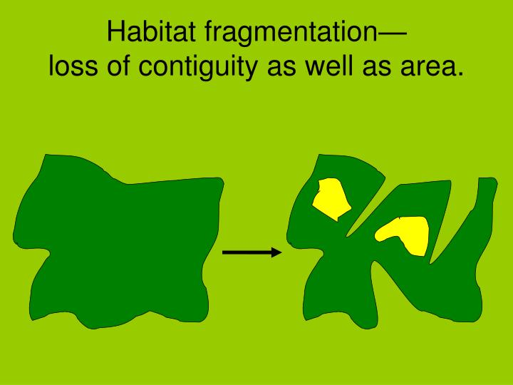 Habitat fragmentation—