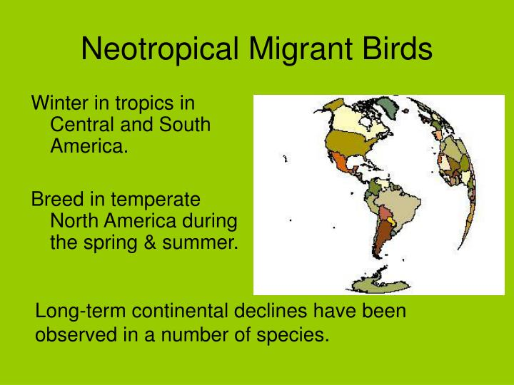 Neotropical Migrant Birds