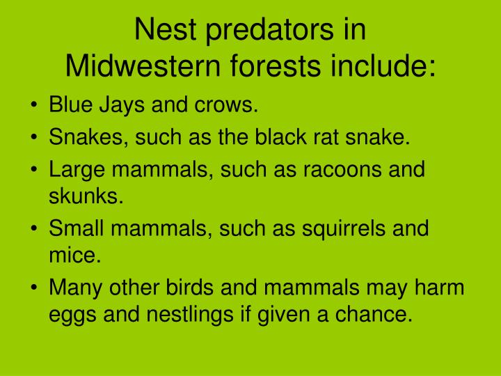 Nest predators in