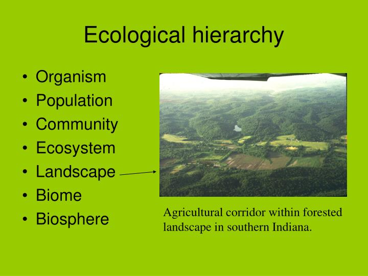 Ecological hierarchy