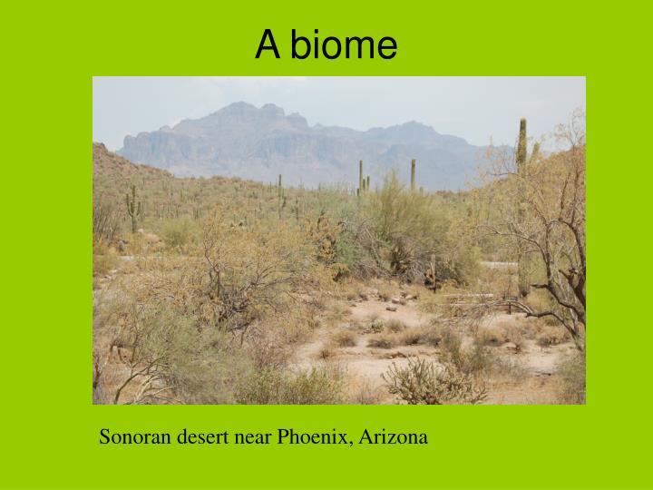 A biome