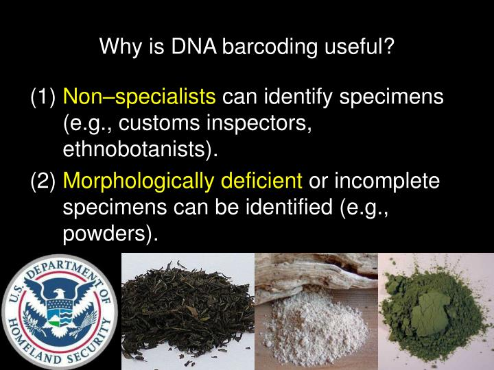 Why is DNA barcoding useful?