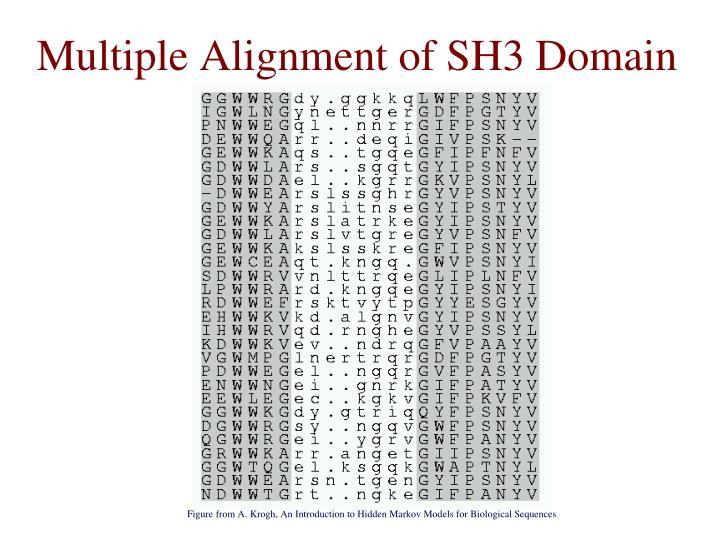 Multiple Alignment of SH3 Domain