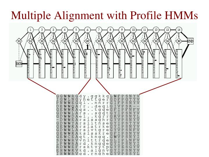 Multiple Alignment with Profile HMMs