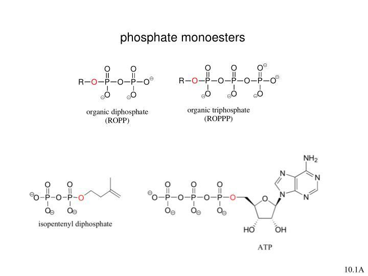 phosphate monoesters