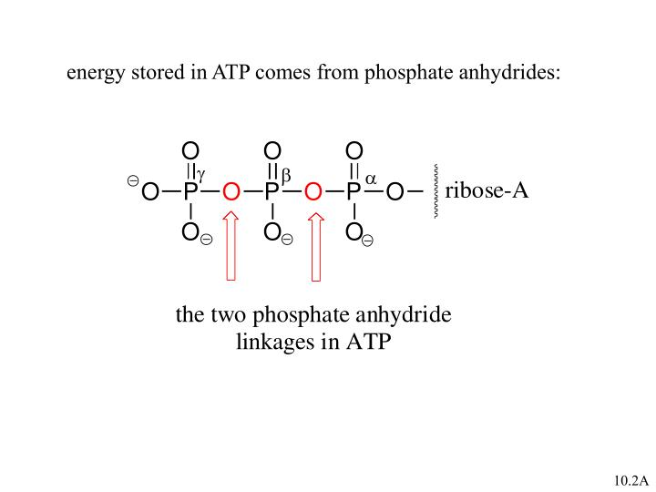 energy stored in ATP comes from phosphate anhydrides: