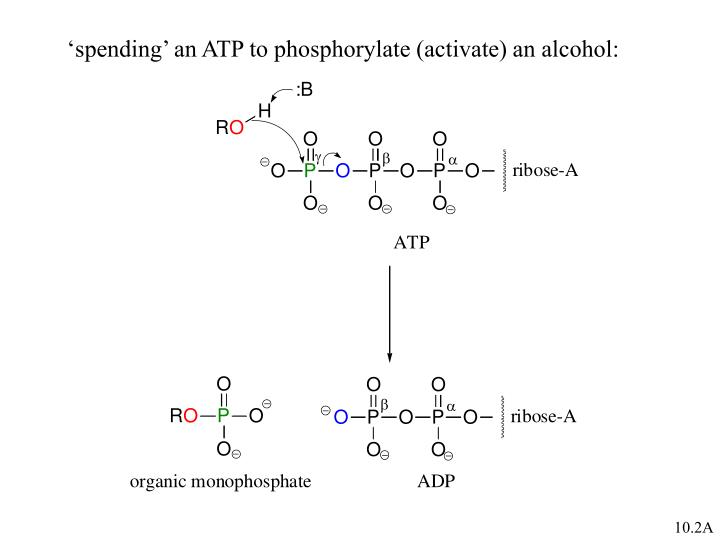 'spending' an ATP to phosphorylate (activate) an alcohol: