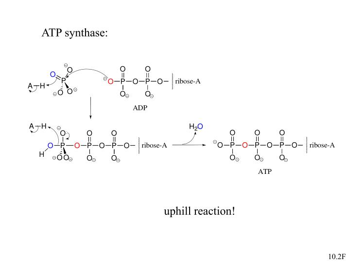 ATP synthase: