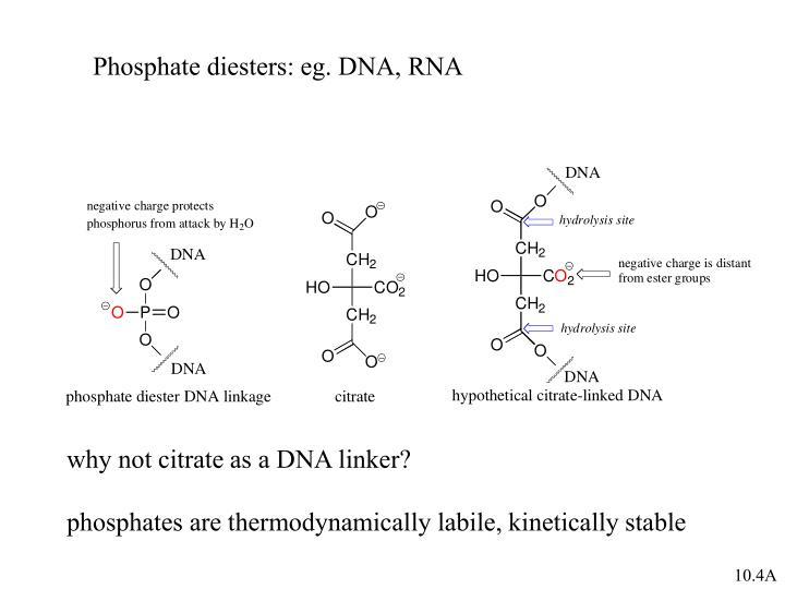 Phosphate diesters: eg. DNA, RNA
