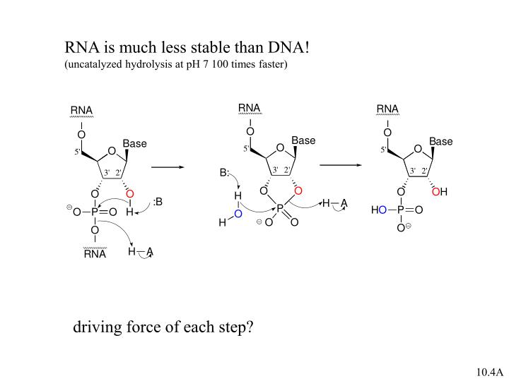 RNA is much less stable than DNA!