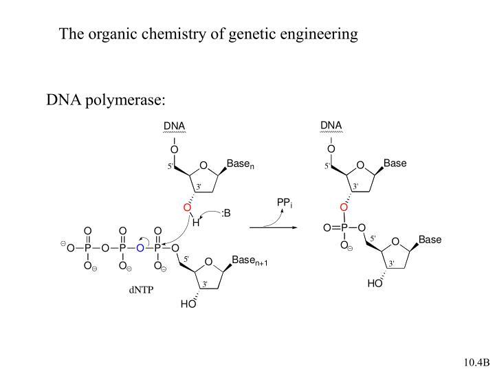 The organic chemistry of genetic engineering