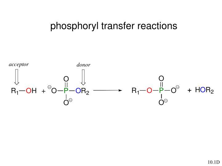 phosphoryl transfer reactions