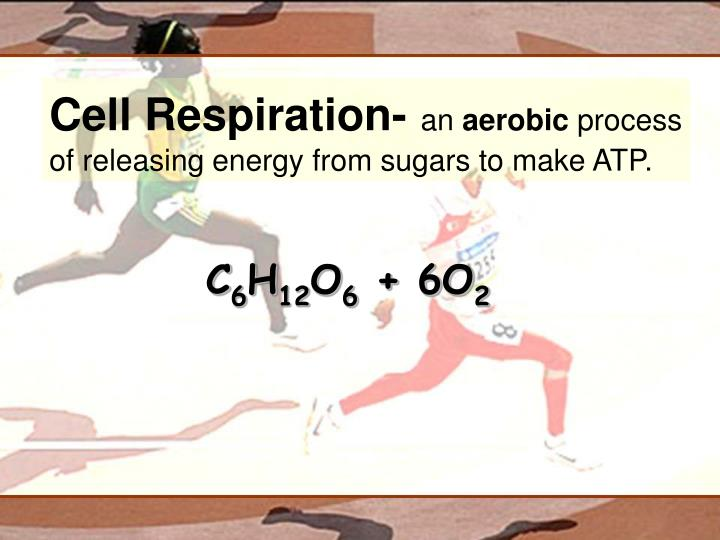 Cell Respiration-