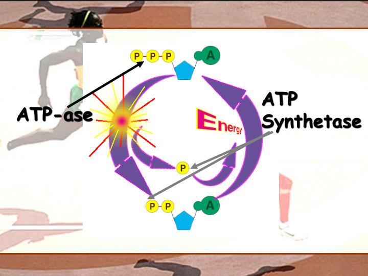 ATP Synthetase