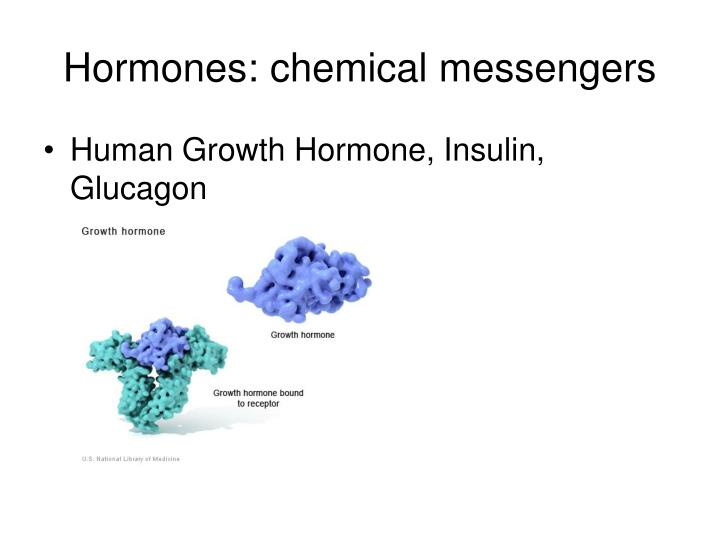 Hormones: chemical messengers