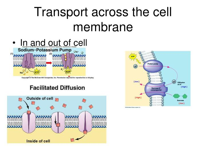 Transport across the cell membrane