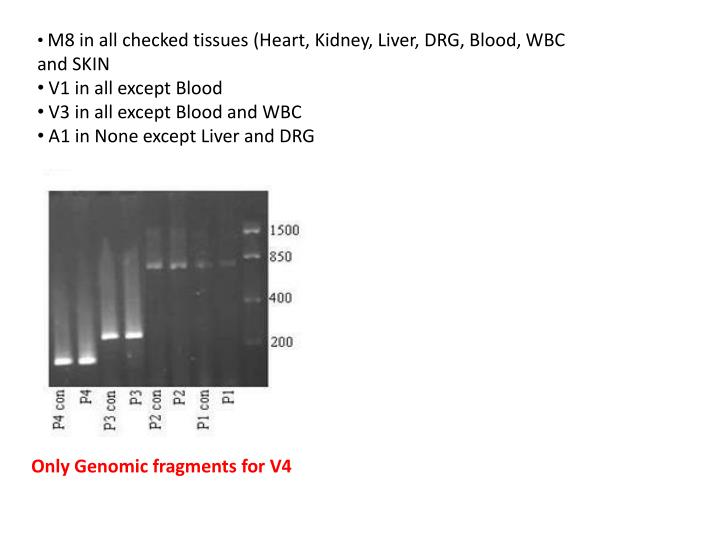 M8 in all checked tissues (Heart, Kidney, Liver, DRG, Blood, WBC and SKIN