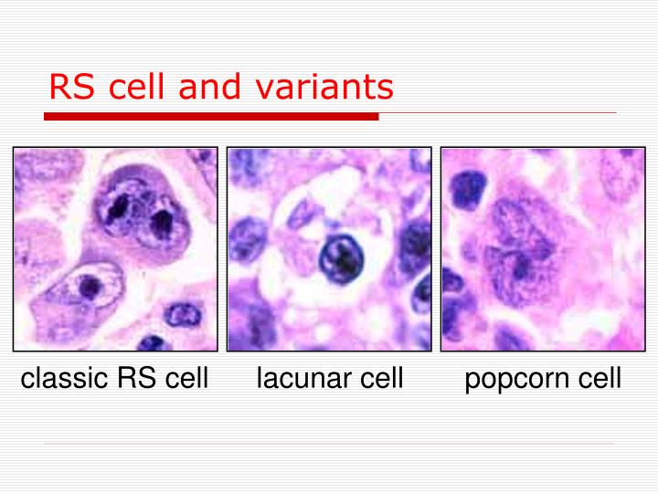 RS cell and variants