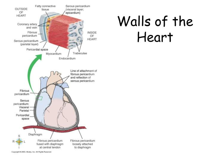 Walls of the Heart
