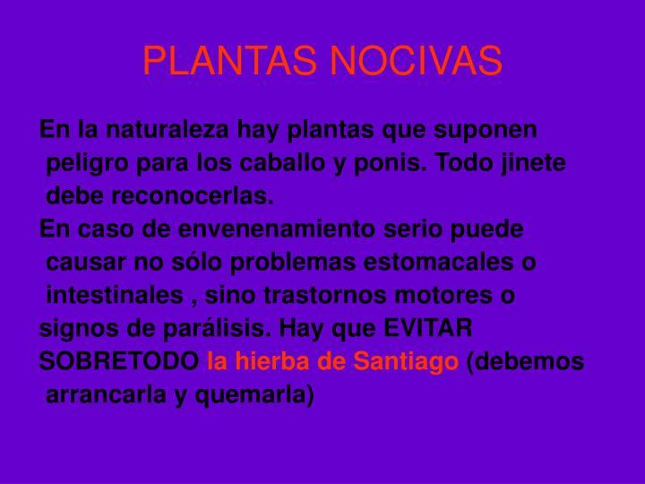 PLANTAS NOCIVAS