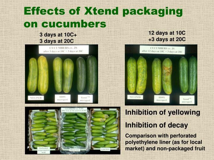 Effects of Xtend packaging on cucumbers