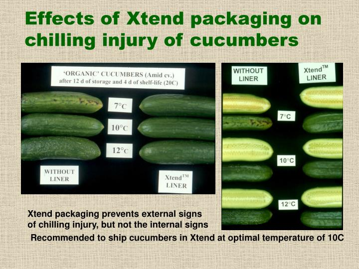 Effects of Xtend packaging on chilling injury of cucumbers