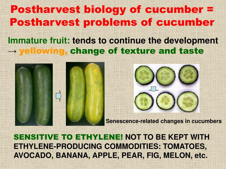 Postharvest biology of cucumber = Postharvest problems of cucumber