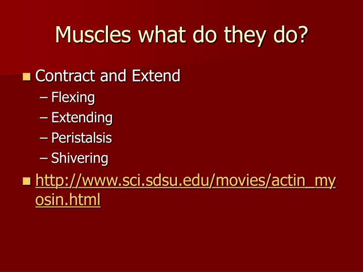 Muscles what do they do?