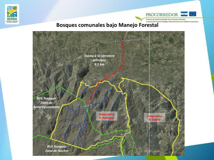 Bosques comunales bajo Manejo Forestal