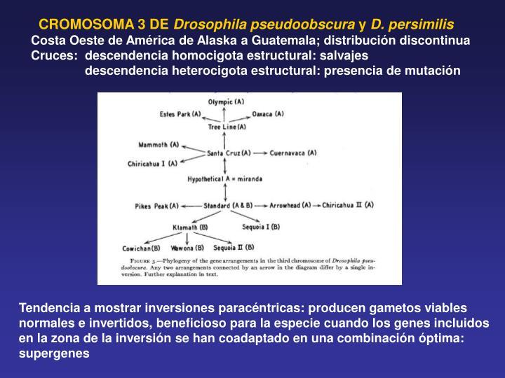 CROMOSOMA 3 DE