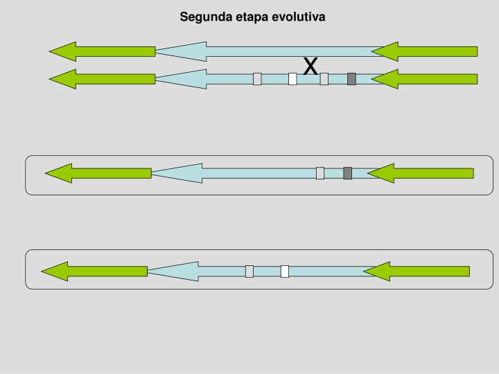 Segunda etapa evolutiva