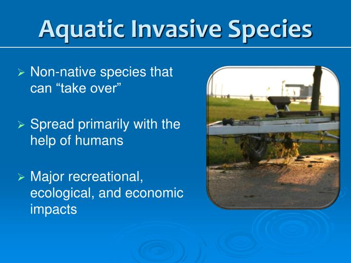 Aquatic Invasive Species