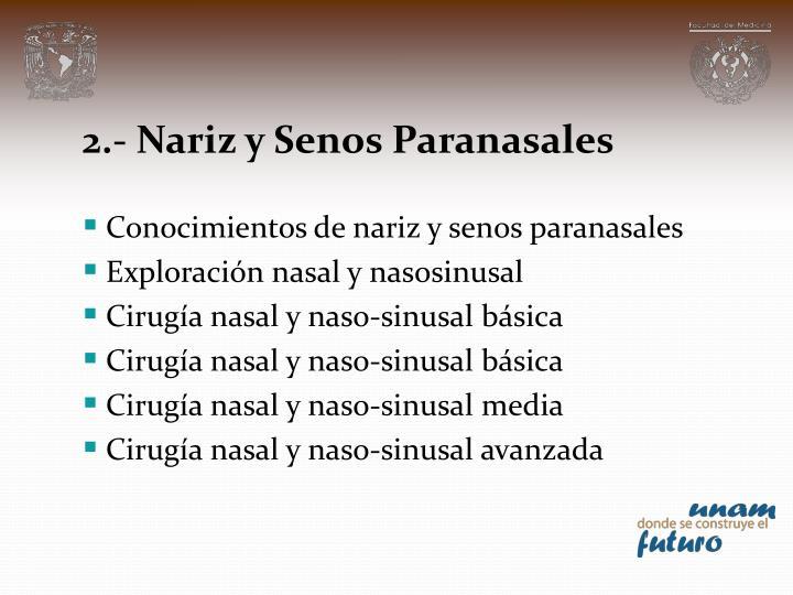 2.- Nariz y Senos