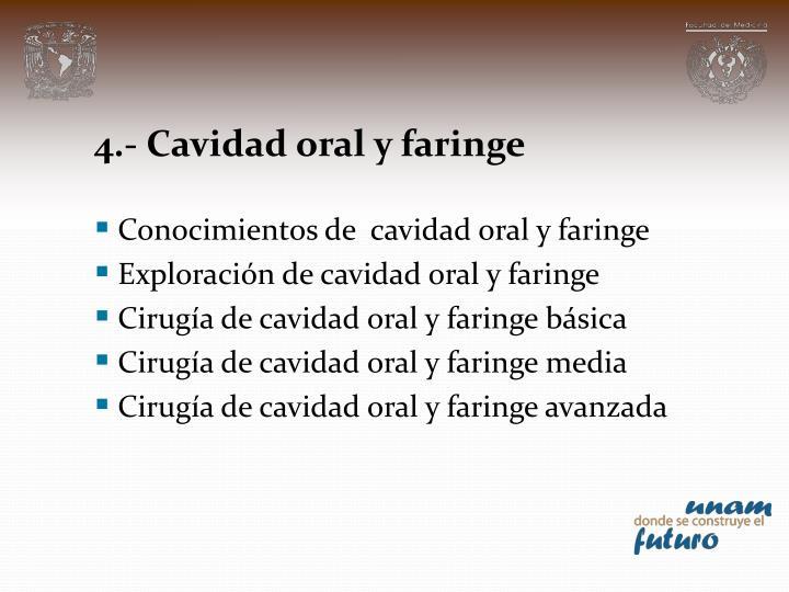 4.- Cavidad oral y faringe