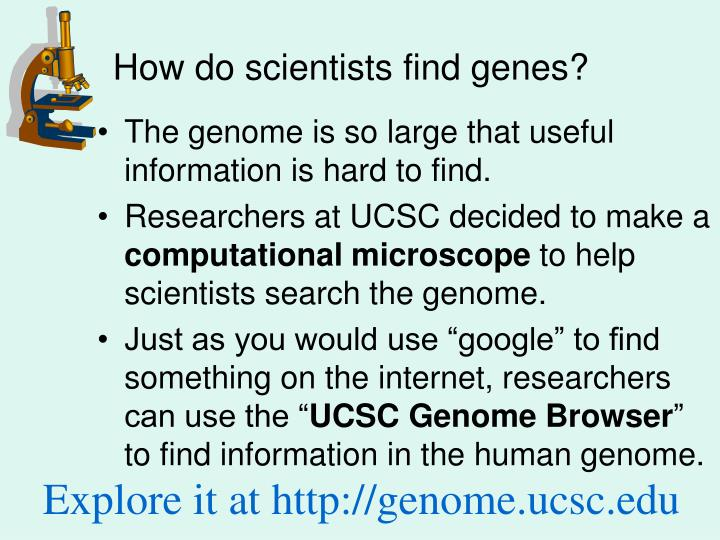 How do scientists find genes?
