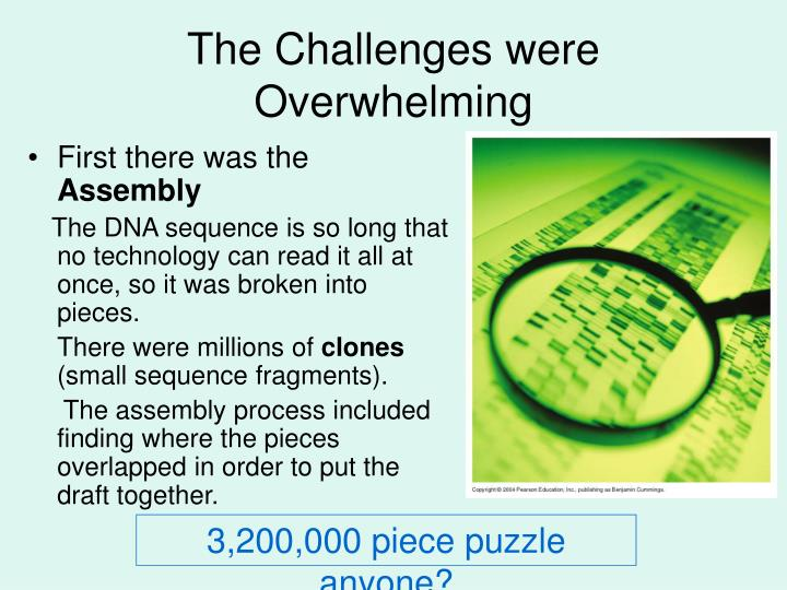 The Challenges were Overwhelming