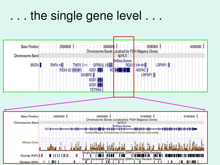 . . . the single gene level . . .