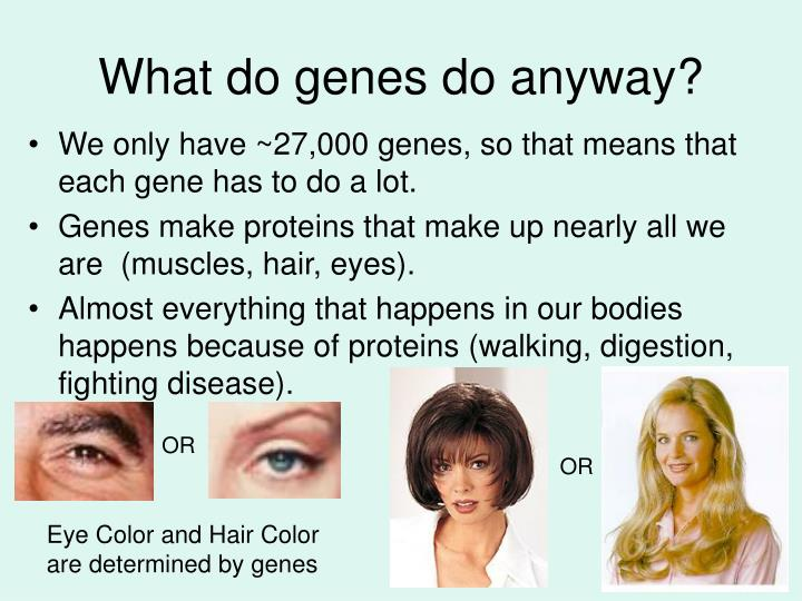 What do genes do anyway?