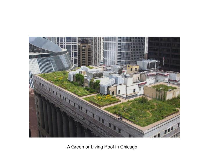 A Green or Living Roof in Chicago